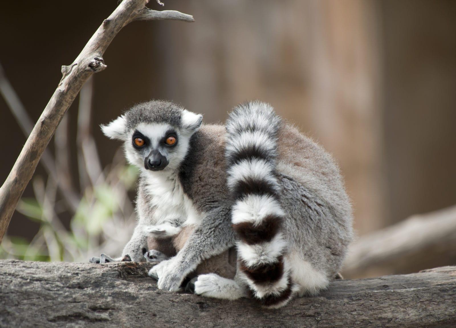 Madagascar, Mauritius & Seychelles Honeymoon | Honeymoon